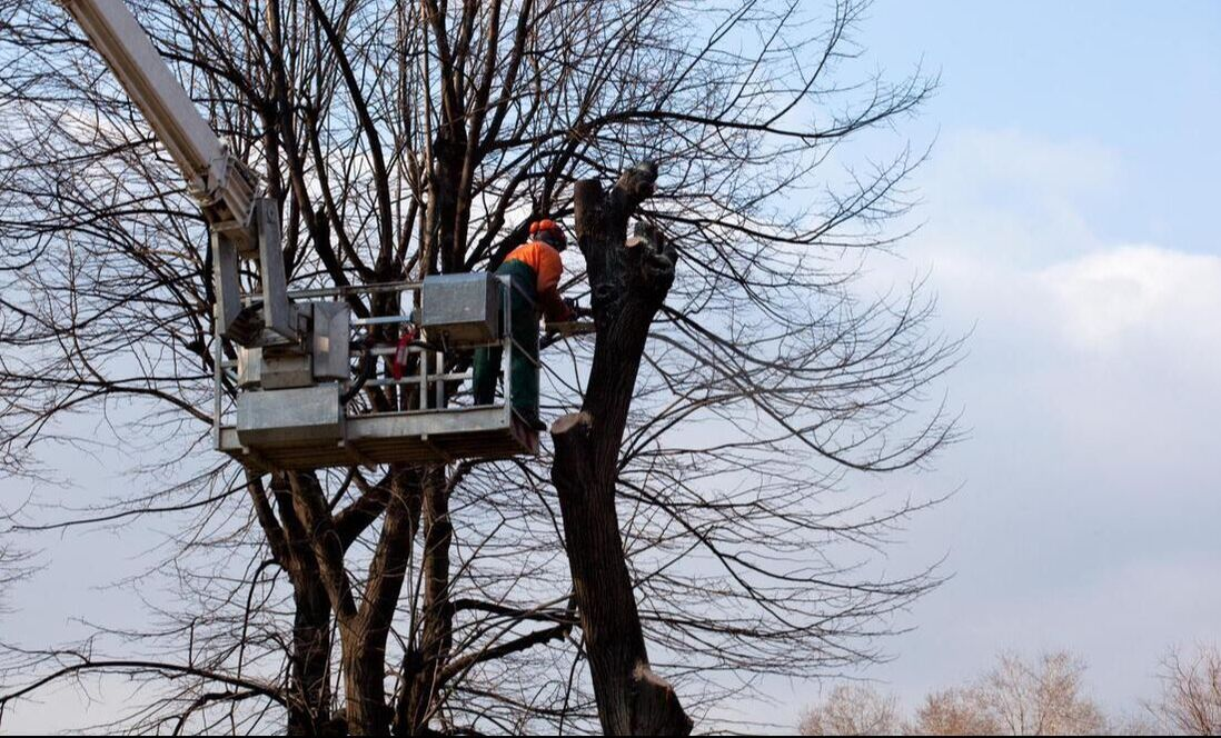 Arborist pruning the tree