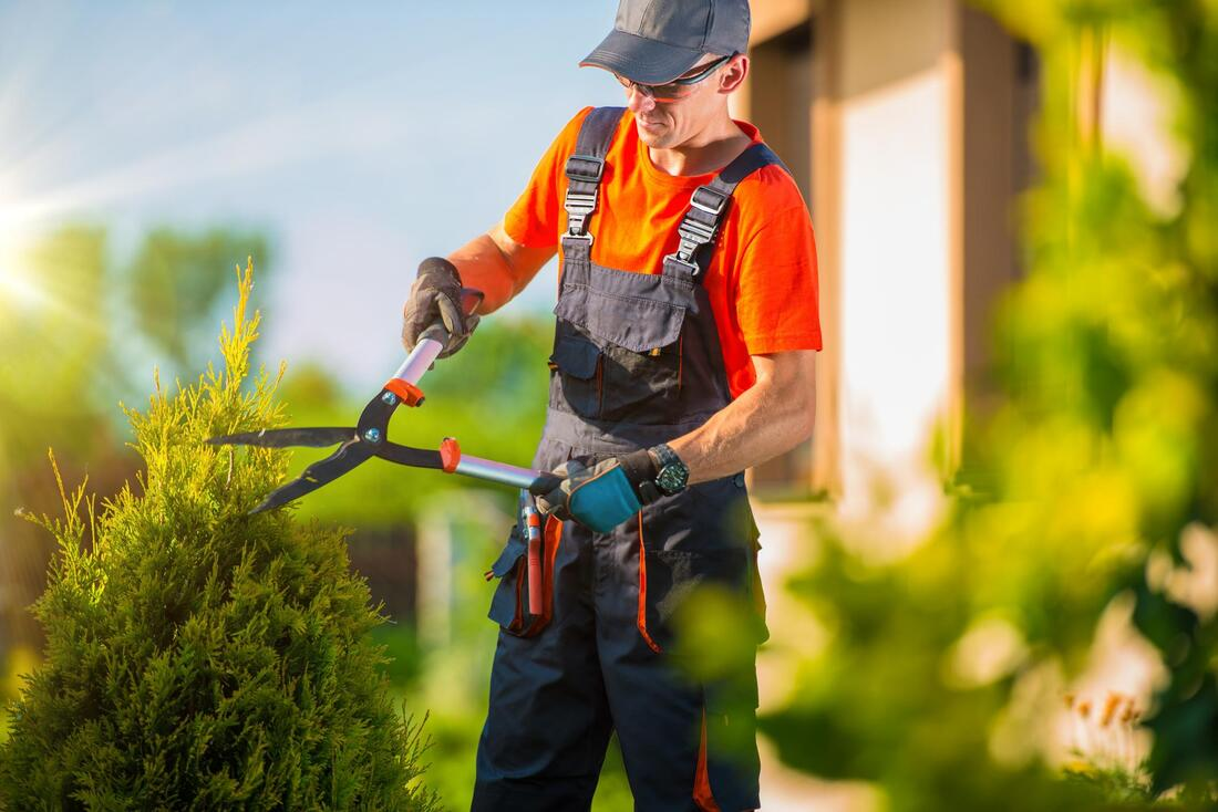 Arborist trimming the bush